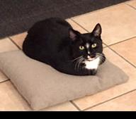 Tierbestattunegn Katze Winsen Elbmarsch